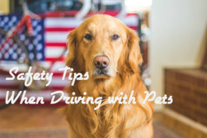 Driving with Pets Safety Tips