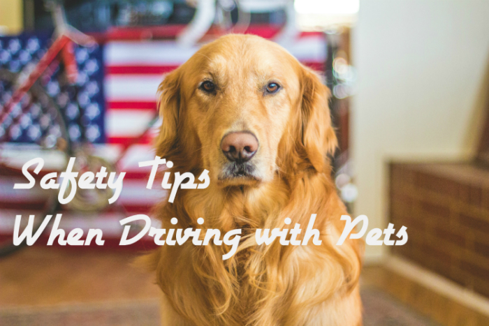 Driving with Pets Safety Tips Golden Retriever in front of US Flag