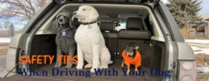 Safety Tips When Driving With Your Dog