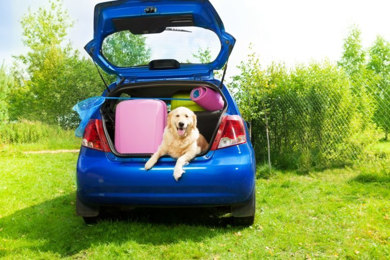 Removing Dog Hair from Your Vehicle